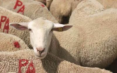 Un giorno da pastore