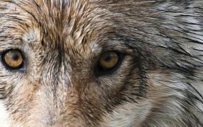 Nel regno del lupo
