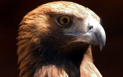 Atlante degli uccelli nidificanti