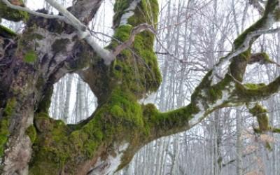 Nel bosco vetusto
