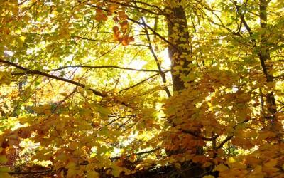 L'oro del bosco