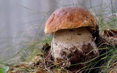 A funghi col micologo
