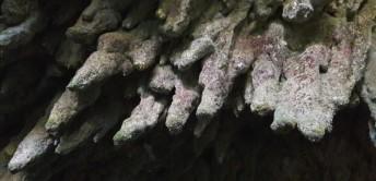 grotta_colle_03.jpg