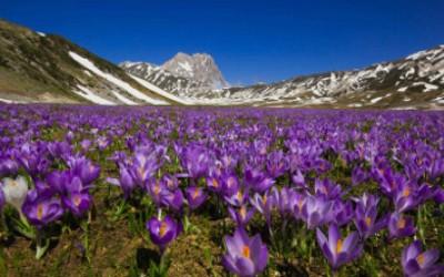 Primavera nel Piccolo Tibet