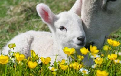 Nella terra dei pastori