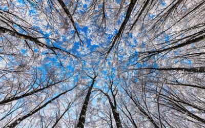 Bianca neve di primavera