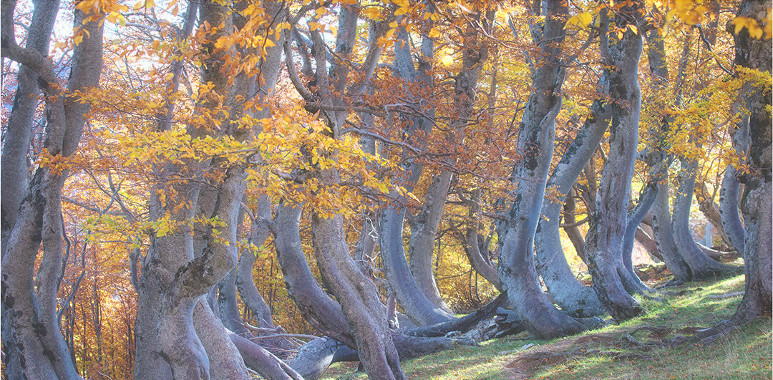 cavata_autunno_03.jpg