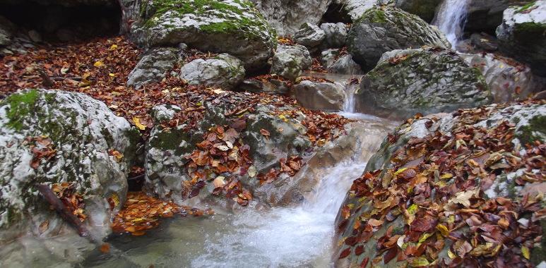 selva_autunno_04.jpg